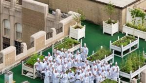 Waldorf Astoria Rooftop Garden