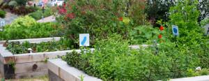Mar'sel Garden